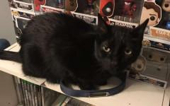 Gatto ritrova collare amico deceduto: una commovente storia