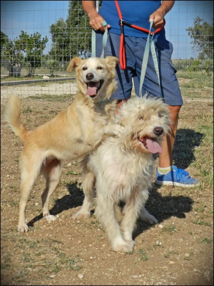 Lilly e Spino cercano casa: appello per adozione