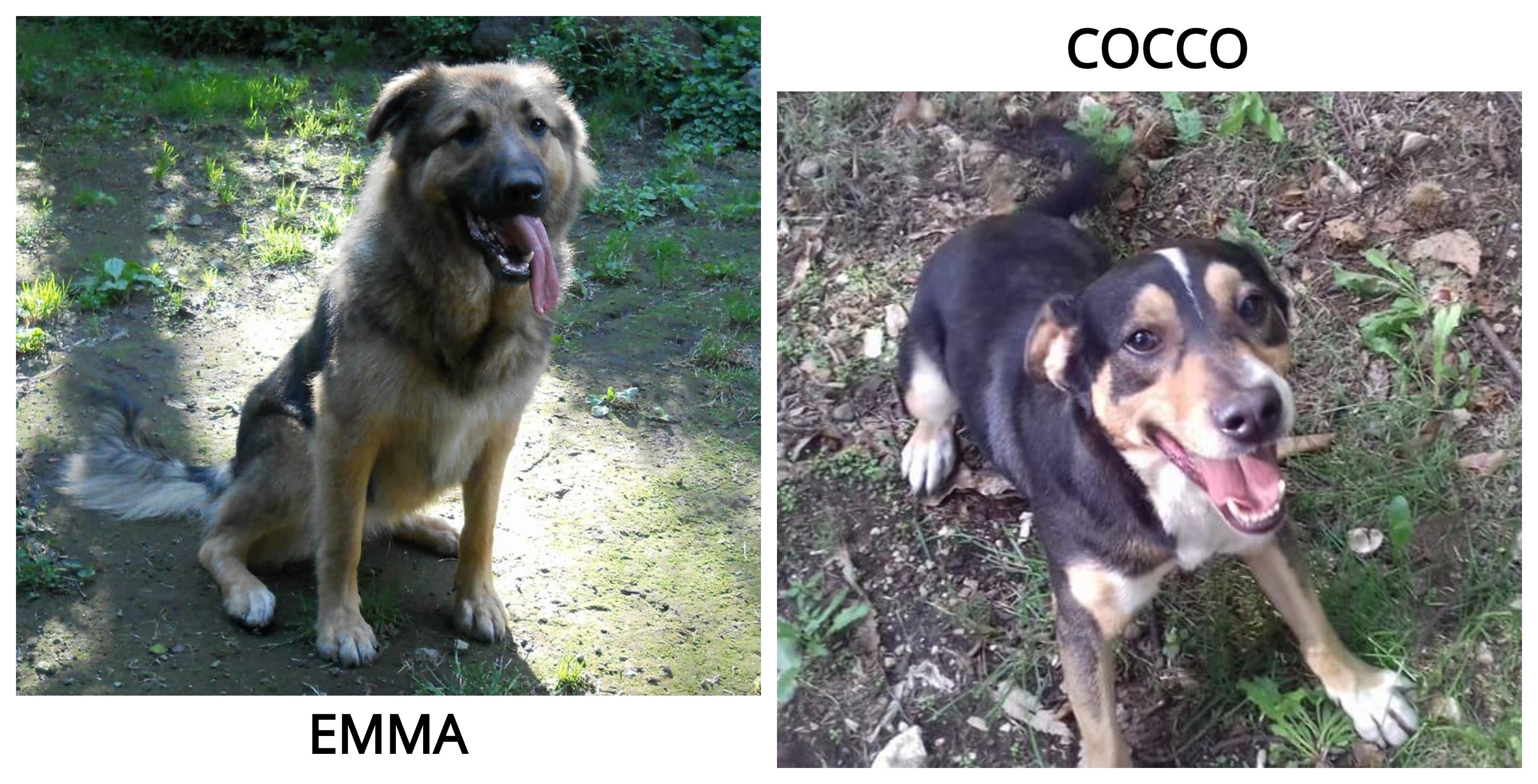 Emma e Cocco cercano casa: appello per adozione