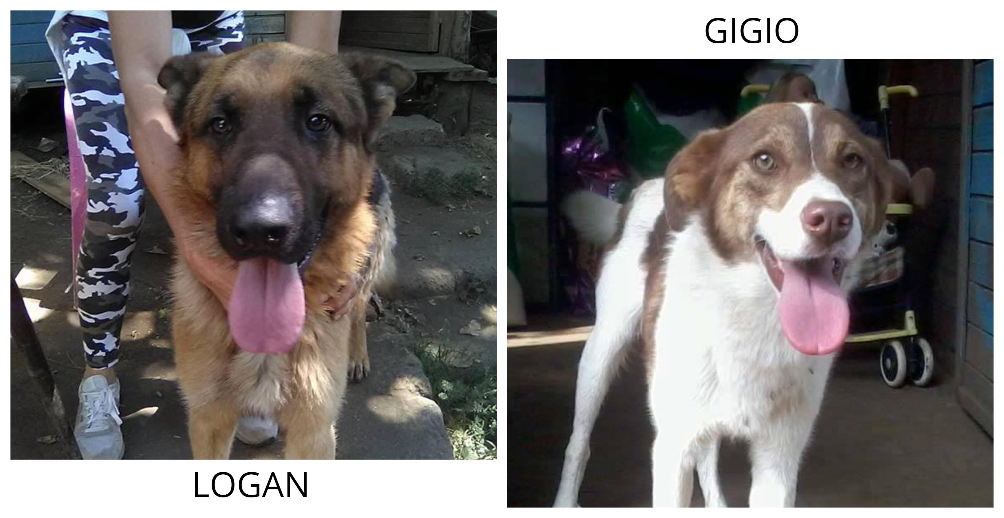Logan e Gigio cercano casa: appello per adozione