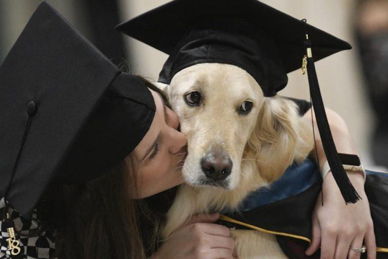 Laurea ad honorem cane Griffin per l'aiuto alla sua umana