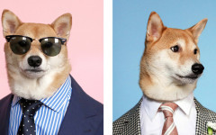 Menswear dog: il cane più fashion del web