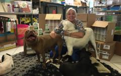Zylkene contro le paure di cani e gatti: come può aiutarli?