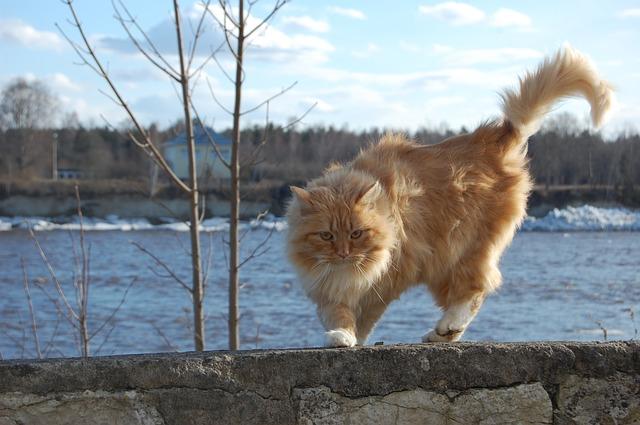 """Gatti che gonfiano pelo, coda e """"fanno la gobba"""": qual è il motivo?"""