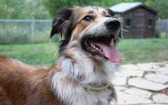 Alergias alimentarias en perros: alimentos peligrosos