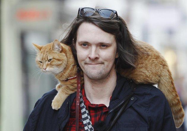 """Bob il gatto che ha ispirato il film """"A spasso con Bob"""""""