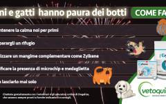 Infografica: cani e gatti hanno paura dei botti, che fare?
