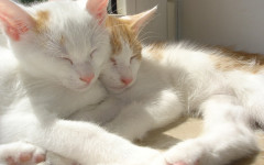 Beneficios que aportan los gatos a la salud humana