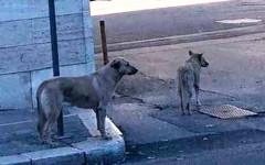 Cani attendono padrone per due settimane fuori ospedale