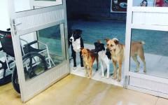 Cani aspettano senzatetto fuori dalla porta dall'ospedale