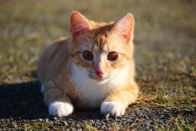 Come nutrire un gatto prima di un viaggio? Ecco tutti i consigli!