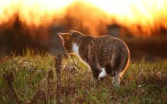 Envenenamiento en gatos: precaución y recomendaciones