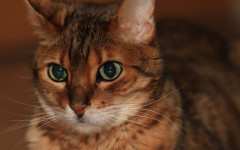 Leaving your cat alone: read this before leaving her