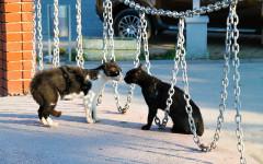 Parar y evitar peleas entre gatos: lo que debes saber