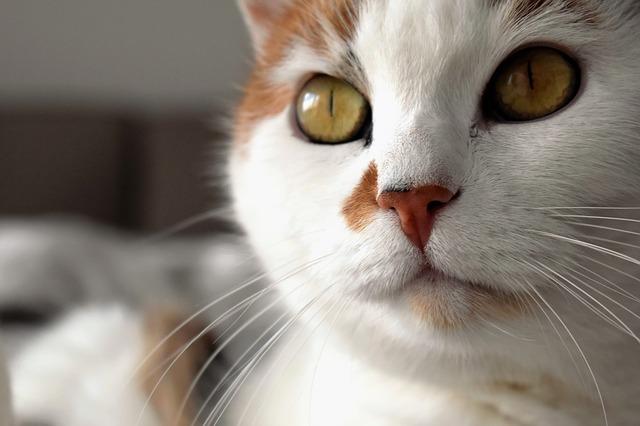 Vacunas para gatos: la salud es primero