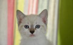 Alimento para gatos con estómago sensible