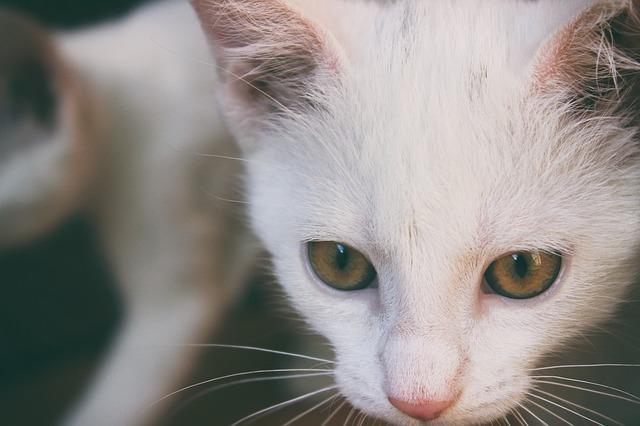 Gatti con digestione delicata