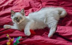 Jugando con el gato: opciones para compartir con tu felino