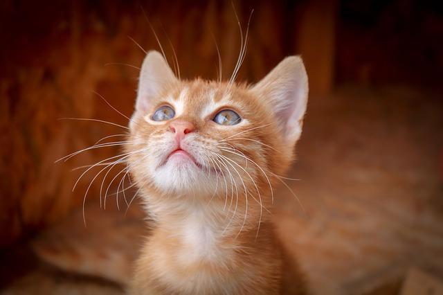 Gastritis gato