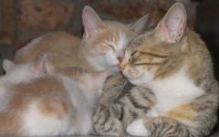 Amor de gatos: la ternura como nunca antes