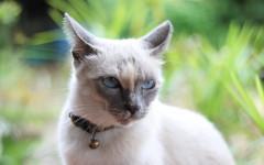 Comportamenti detestati dai gatti: quali sono?