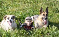 Cani e bambini all'aria aperta: come farli giocare