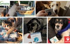 Zylkene per cani e gatti: come aiuta gli ospiti delle associazioni?