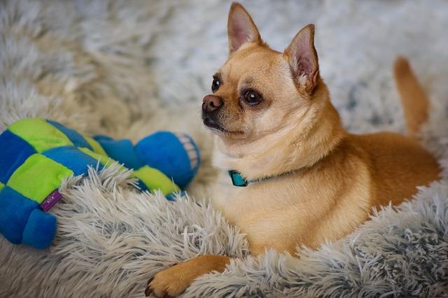 Vacunas obligatorias para perros: medidas ineludibles