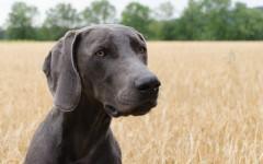 Cani con digestione delicata: cosa fare?