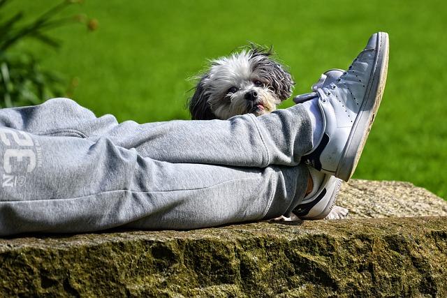 Mi perro se monta en mi pierna: causas y recomendaciones