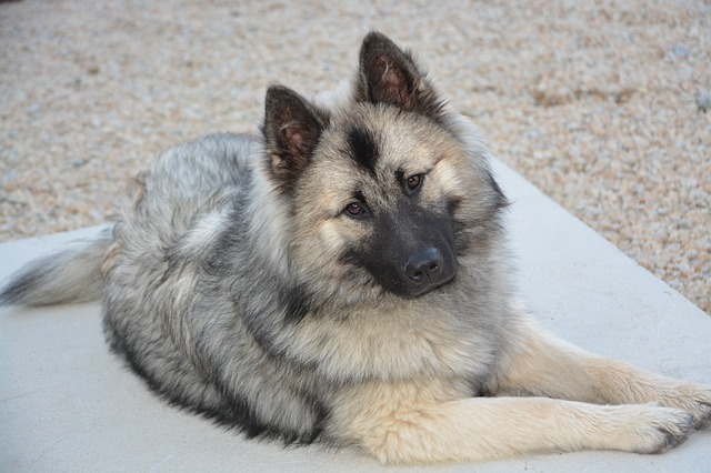 Cane è malato: come fare a capirlo e cosa fare