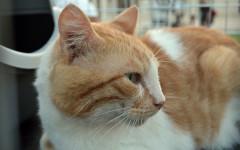 Enzo cerca casa: appello per adozione