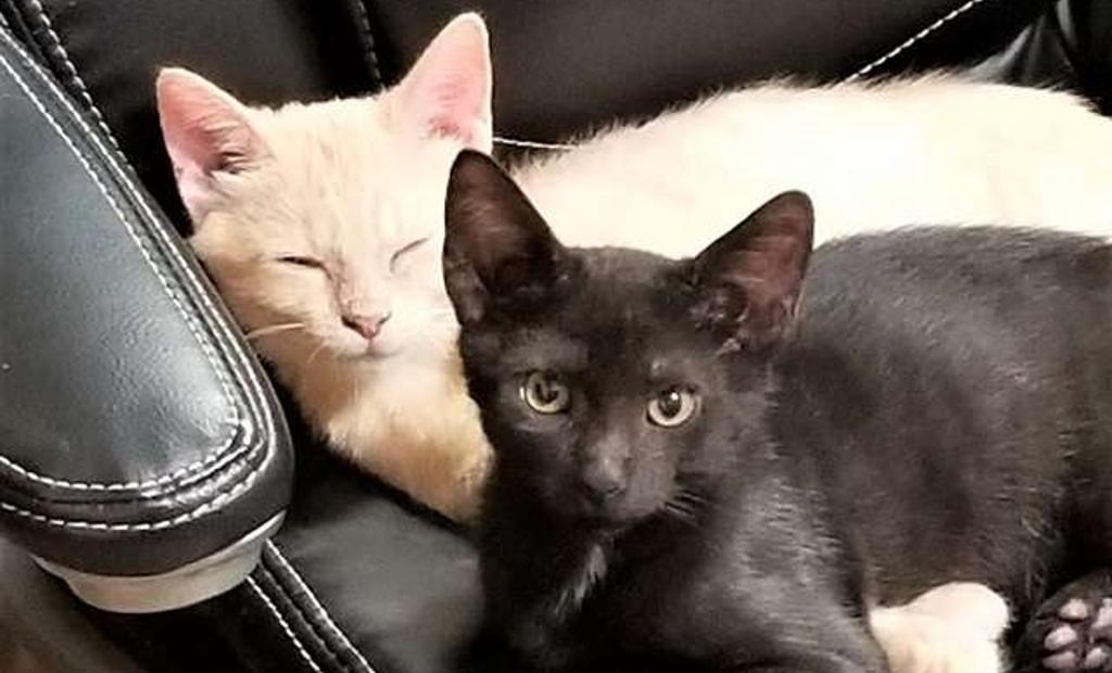 Coppia adotta un gatto e trova un bella sorpresa!