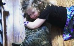 Gatos de tamaño mediano: un gran compañero