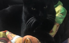 Gatto si diploma: Bernardo è la mascotte ufficiale della scuola