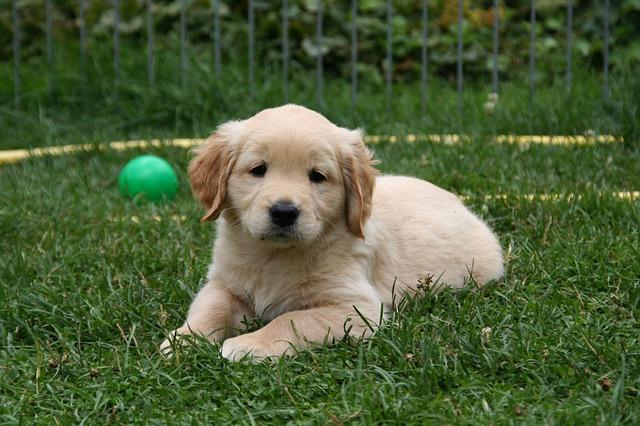 Cambios de comportamiento en perros: las posibles señales