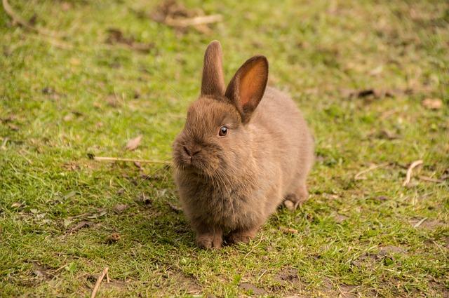 Quanto dormono conigli: dormono di giorno o di notte?