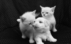No da dire a cani e gatti: quali sono e come fare