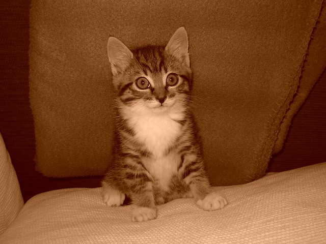 Mantener a tu gato sano: consejos para la salud felina