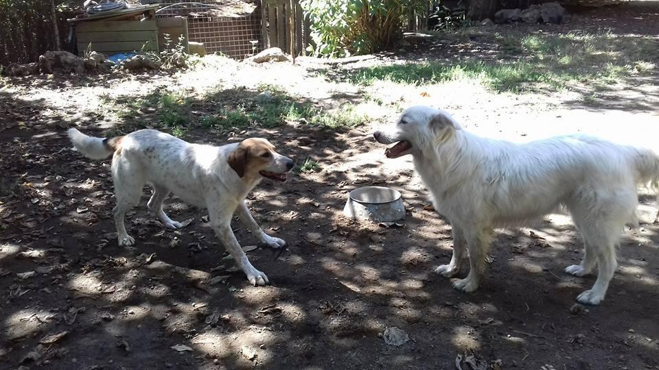 Lea e Lulù cercano casa: appello per adozione