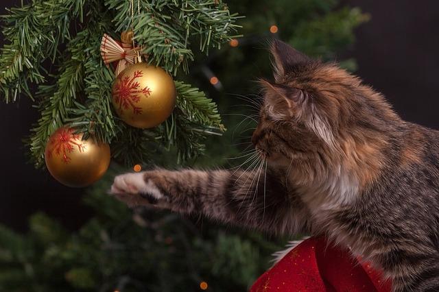 Natale con cani e gatti: cibi e piante da evitare nelle feste