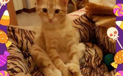 Reddy cerca casa: appello per adozione