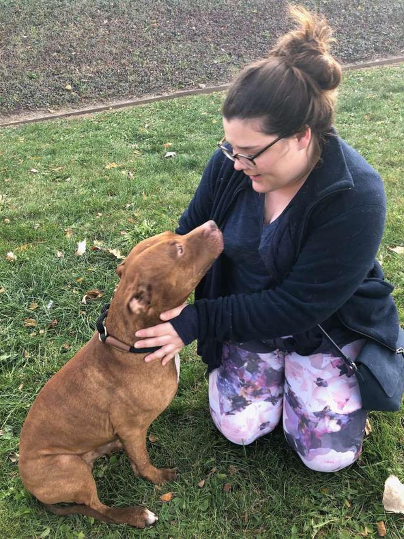 Cane vittima di bullismo ha una nuova possibilità