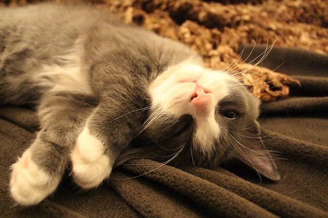 Cómo saber si mi gato está enfermo: síntomas más frecuentes