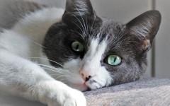 Gatto malato: come capire se Micio non sta bene?