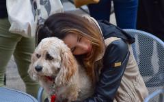 Cani non amano abbracci: la risposta della scienza