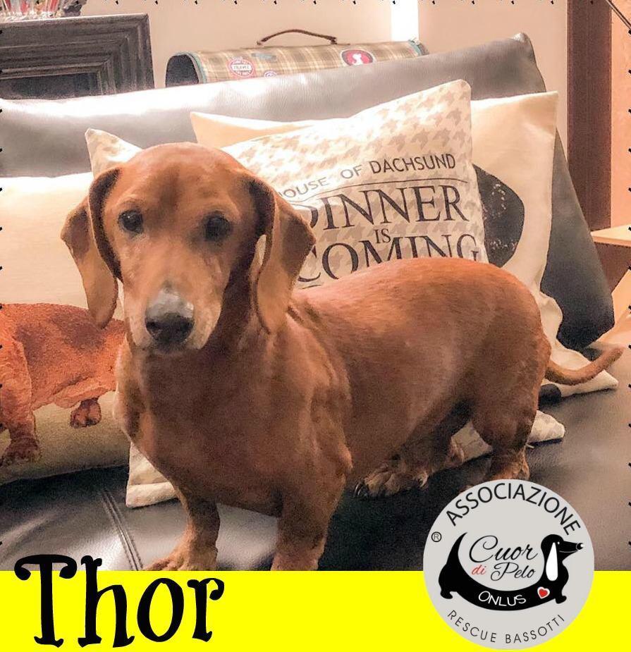 Thor cerca casa, aiutiamolo! Appello per adozione