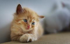 dejar un gato solo