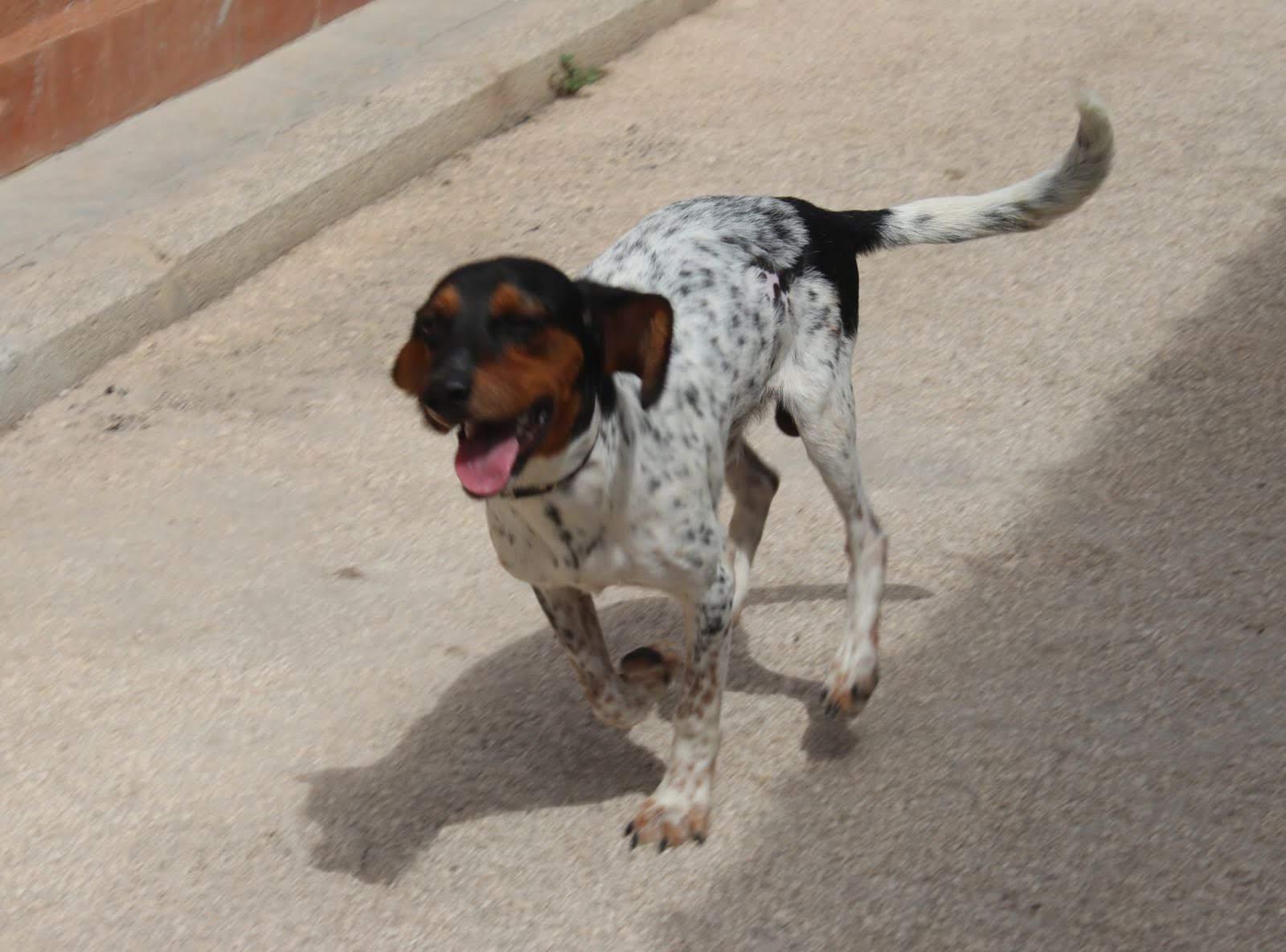 Happy cerca casa, aiutiamolo! Appello per adozione