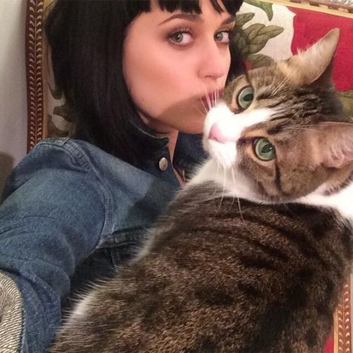Katy Perry's kitten